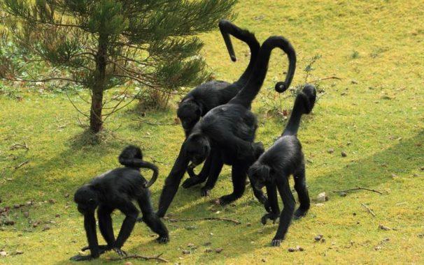 Spider Monkeys   Zoo Animal Songs